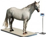 Digital Cow Scale 1Kg to 2000Kg - Bangladesh